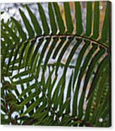 The Shade Of A Fern Acrylic Print
