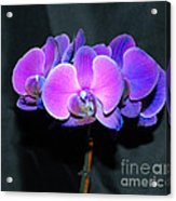 The Shade Of Orchids Acrylic Print
