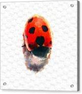 The Shy Ladybug Acrylic Print