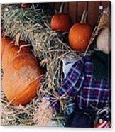 The Shy Pumpkin-man Acrylic Print