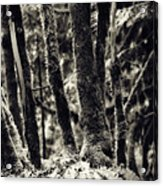 The Silent Woods Acrylic Print