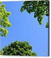The Sky Through Trees Acrylic Print