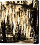 The Spanish Moss Acrylic Print