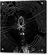 The Spider And The Fly . Black And White Acrylic Print