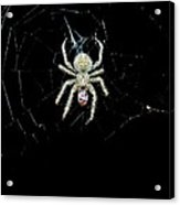 The Spider Acrylic Print