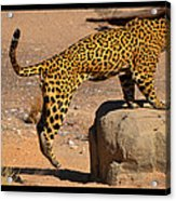 The Spotted Cat Acrylic Print