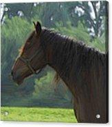 The Stallion Acrylic Print by Steve K