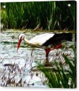 The Stork Acrylic Print