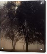 The Sun Peeks Through The Branches Acrylic Print