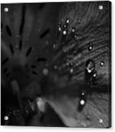 The Tears Have All Been Shed Acrylic Print