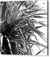 The Tourist Pineapple Black And White Acrylic Print