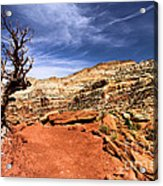 The Trail Ahead Acrylic Print