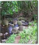 The Trail By The Creek Acrylic Print