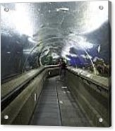 The Travelator At The Underwater World In Sentosa In Singapore Acrylic Print