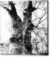 The Tree Acrylic Print