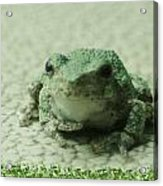 The Tree Frog Acrylic Print