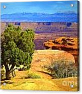 The Tree The Canyon And The Mountains Acrylic Print