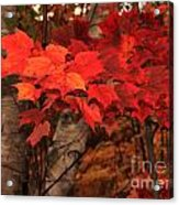 The True Beauty Of Autumn Acrylic Print