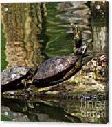 The Turtles Acrylic Print