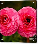 The Twin Love Acrylic Print
