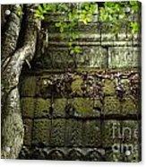 The Wall Ta Prohm 2 Acrylic Print