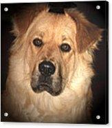 The Watch Dog Acrylic Print