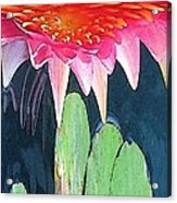 The Water Lily Unleashed Acrylic Print