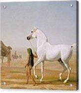 The Wellesley Grey Arabian Led Through The Desert Acrylic Print