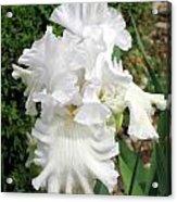 The White Iris Acrylic Print