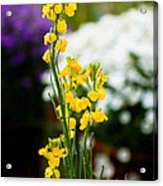 The Yellow Delight Acrylic Print