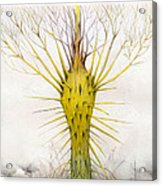 The Yellow Plant Acrylic Print by Bjorn Eek