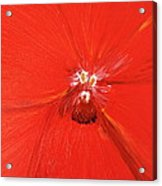 The Zoom Of Red Orchid Acrylic Print by Pretchill Smith