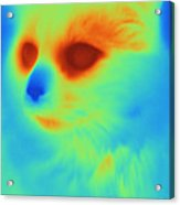 Thermogram Of A Cat Acrylic Print