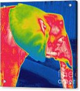 Thermogram Of An Elephant Acrylic Print