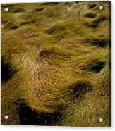 Thick Grasses Blow In The Wind And Form Acrylic Print