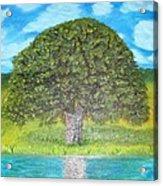 Thinking Tree Acrylic Print