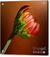 This Broken Blossom Acrylic Print