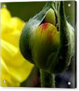 This Buds For You  Acrylic Print