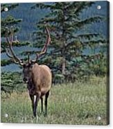 This Is Alberta No.19 - Taking A Stroll Acrylic Print