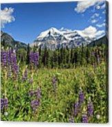 This Is British Columbia No.70 - Summer At Mount Robson Acrylic Print