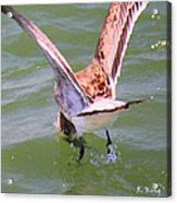This Is How You Catch Them Acrylic Print