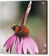 This Is My Flower Acrylic Print