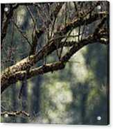 This Is Our World No. 9 - Lets Branch Out Acrylic Print