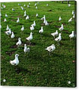 This Meeting Is Now Called To Order Acrylic Print