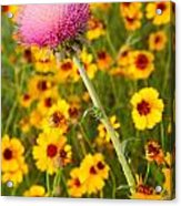 Thistle And Coreopsis 2am-110455 Acrylic Print