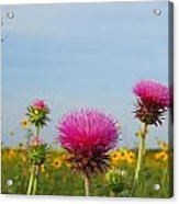 Thistle And Sunflower 2am-110468 Acrylic Print