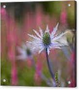 Thistle Dream Grove Acrylic Print