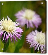 Thistle Illusion Acrylic Print