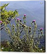 Thistle On The Mountain Acrylic Print