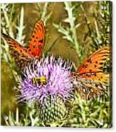 Thistlefly Acrylic Print